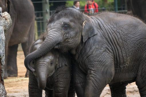 حقایق جالب و خواندنی در مورد فیل ها