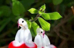 گلی که هر ۴۰۰ سال قابل رویت است