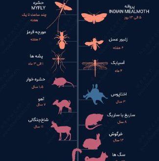 طول عمر جانداران مختلف چقدر است؟
