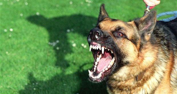 هنگام حمله سگ چه کنیم؟آموز