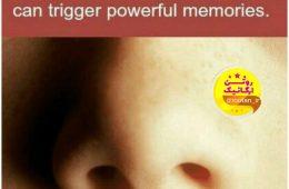 بینی انسان مستقیما به مرکز حافظه در مغز متصل است