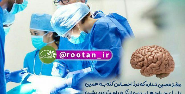 مغز عصبی ندارد که درد را احساس کند
