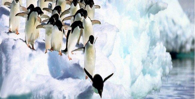یکی برای همه نوعی از پنگوئ