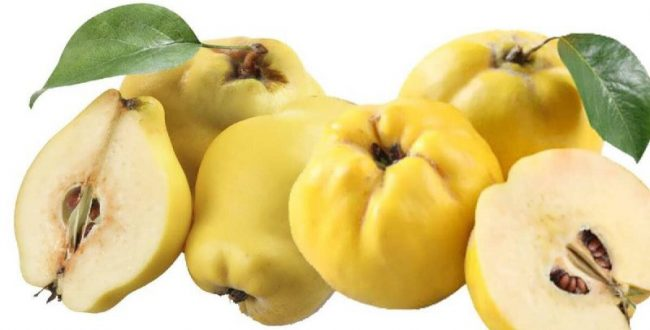 از جمله میوههایی که دارای