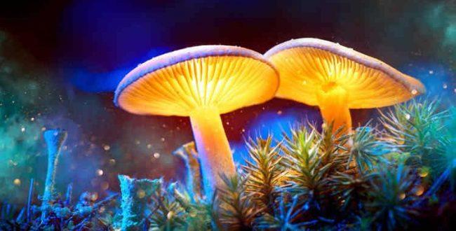 منتخب عکسهای علمی هفته از نگاه زومیت