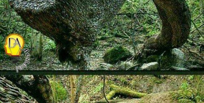 درخت آرزو در سویلا گلن انگلستان در قرن ۱۸ بر این باوربودند