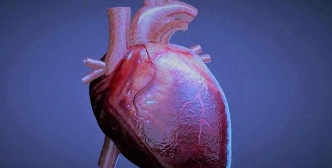 ️ پیوند ماهیچههای قلب رشدیافته در آزمایشگاه به انسان