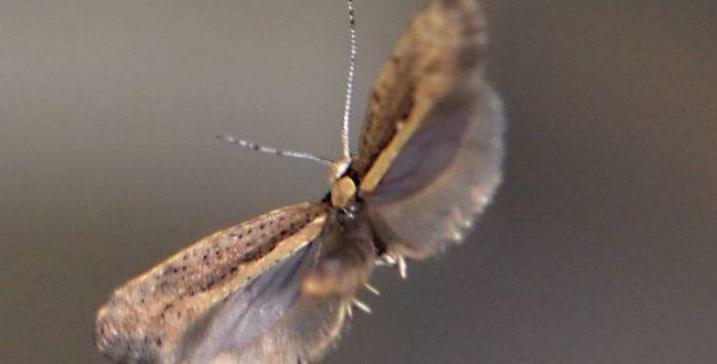 ️ موفقیت دانشمندان درزمینه استفاده از حشرات مهندسیشده برای کنترل آفات