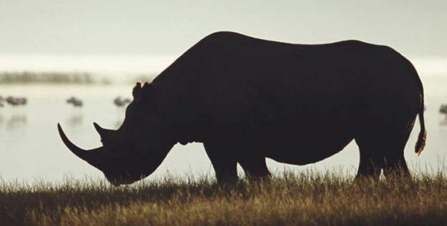 ️همهچیز راجع به انقراض ششم گونههای جانوری که همین حالا در حال رقم خوردن است
