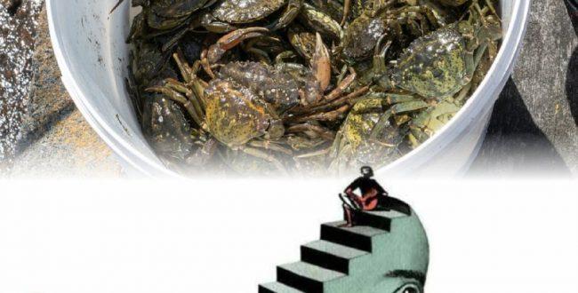 یک خرچنگ تنها زمانی میتواند از درون یک سطل خودش را بیرون بکشد که تنها باشد!