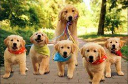تشخیص سرطان ریه با استفاده از سگ ها
