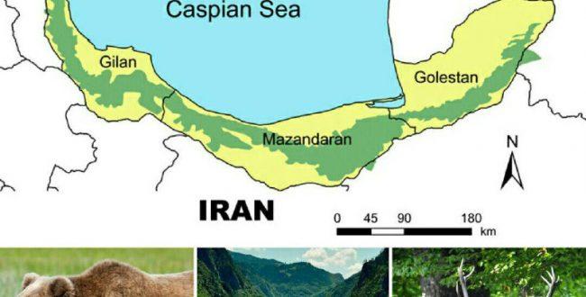 جنگل های ۴۰ میلیون ساله هیرکانی ایران