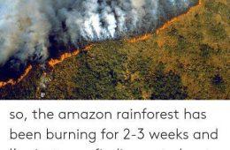ریههای زمین درحال سوختن