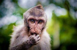 ۱۸ تصویر جالب از حیوانات